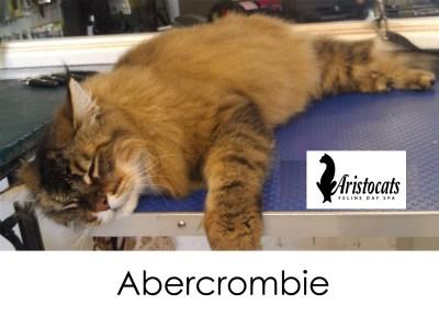 long coat grooming aristocats