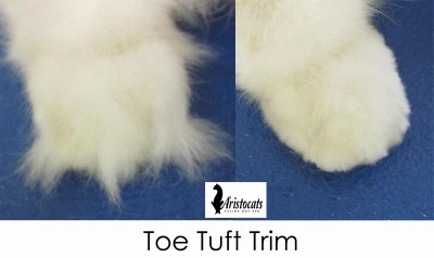 toe-tuft-gallery1