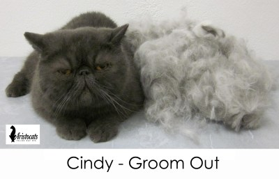 short coat groom brisbane