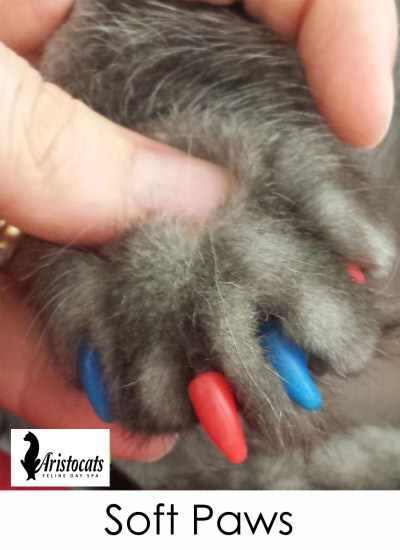 soft paws nail caps
