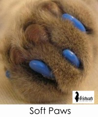 soft paws gallery 4